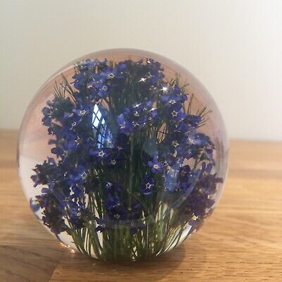 Forget Me Not Paperweight With Real Forget Me Not Collectable Country Gift Art  • 36£