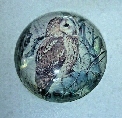 Antique Victorian Dome Glass Owl Paperweight  • 14.99£