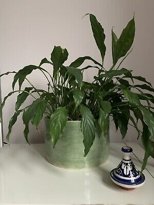 Handmade In London Large Ceramic Plant Pot Anthropology Style • 28£