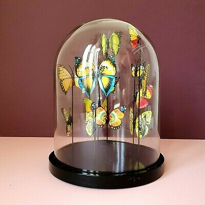 Laura Ashley Victorian Cottagecore Glass Dome BUTTERFLY Botanic Cloche • 32£
