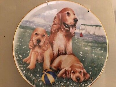 RoyalWorcester  Collectors Wall Plate Dogs And Puppies Cocker Spaniels • 9.50£