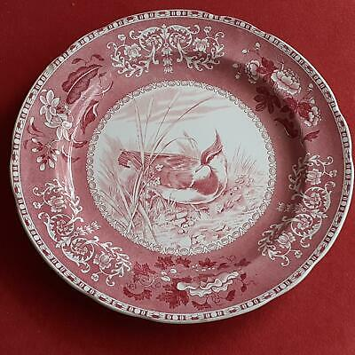 COPELAND SPODE Pink PLOVER PLATE 26cm 10  • 14£