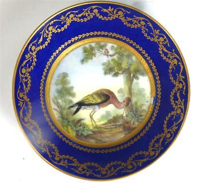 Fine Antique French Sevres / Sevres Style Porcelain Ornithological Saucer • 349.99£