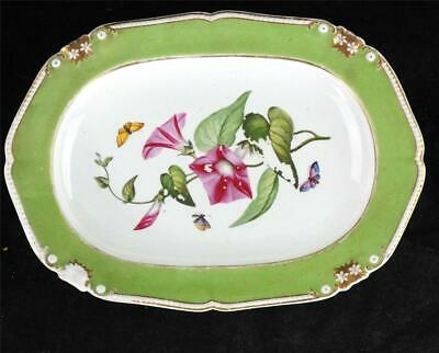 ANTIQUE BLOOR DERBY 14  OVAL PLATE APPLE GREEN BOTANICAL BUTTERFLY I • 124.99£
