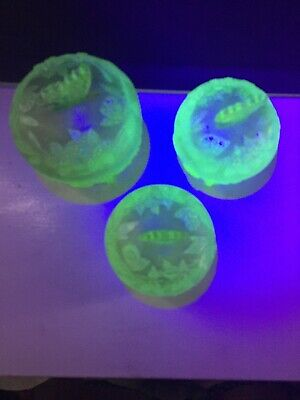 Vintage Uranium Glass Butterfly Vanity Bowls • 9.99£