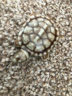 Small Wade Turtle • 0.99£