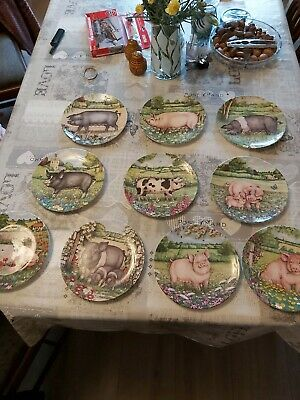10 Royal Doulton Pigs In Bloom Plates,excellent Condition • 40£