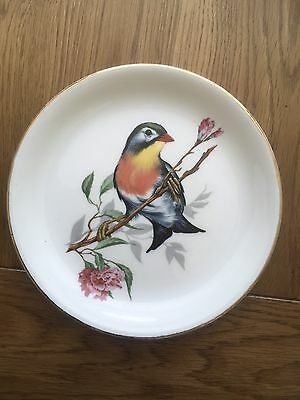 Beautiful Ceramic Plate With A Colourful Bird - Stoke On Trent Pottery. • 6£