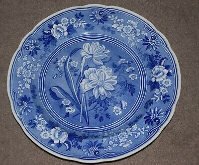 Spode The Blue Room Collection  BOTANICAL   Dinner Plate MINT • 8£