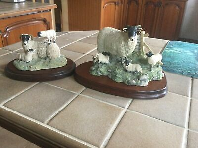 Border Fine Arts Swaledale Sheep & Lamb Figurines X 2 • 80£