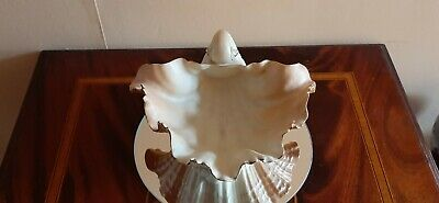 Gorgeous Royal Worcester Blush Ivory Clam Shell Dish Circa 1912 • 75£