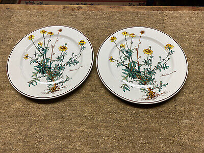 Villeroy And Boch  Botanica Two 9.5 Inch Plates • 20£